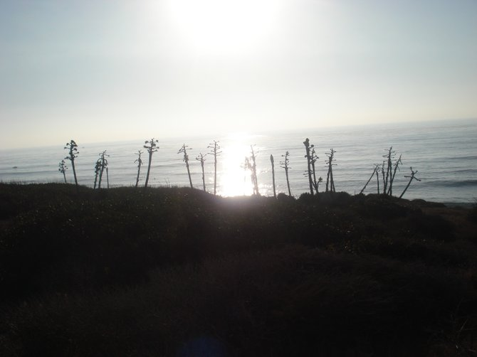 Watching the sunset while atop the Point Loma cliffs