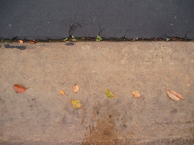 When you are looking closely, you can find miniature landscapes anywhere. I found this one in the street, after a recent rainstorm.
