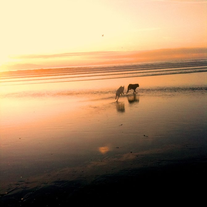 Took my dogs to Ocean Beach Dog Beach when the tide was low...the sunset was gorgeous.
