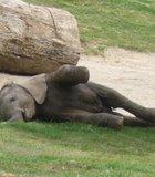 This was taken at the San Diego Wild Animal Park