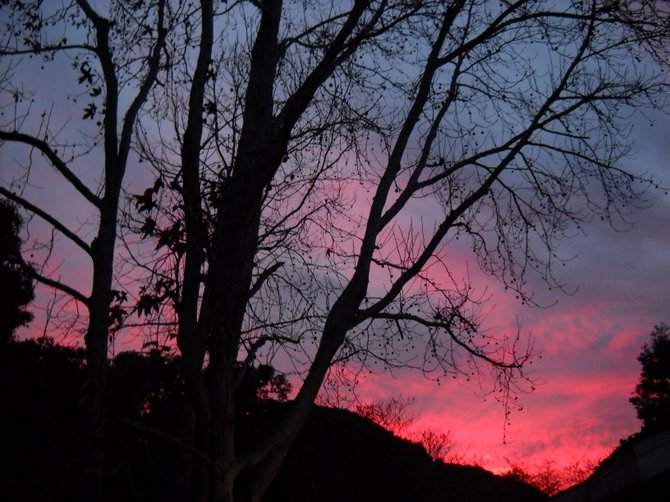 A colorful sunset seen through the Mariner's Cove trees.