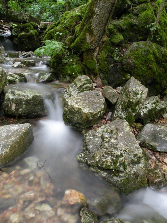 Creek in Arkansas forest.