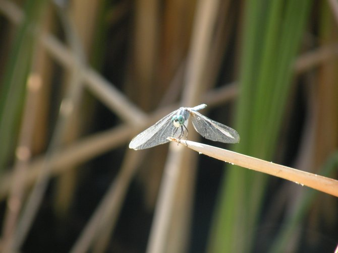 A dragon fly on a branch