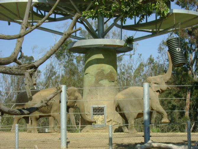 Elephants at the San Diego Zoo