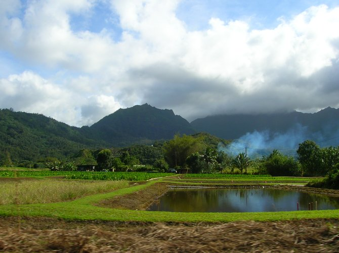 Farm in Hawaii.