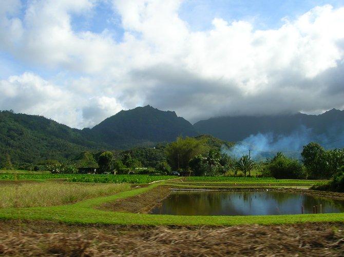 Farm in Hawaii.
