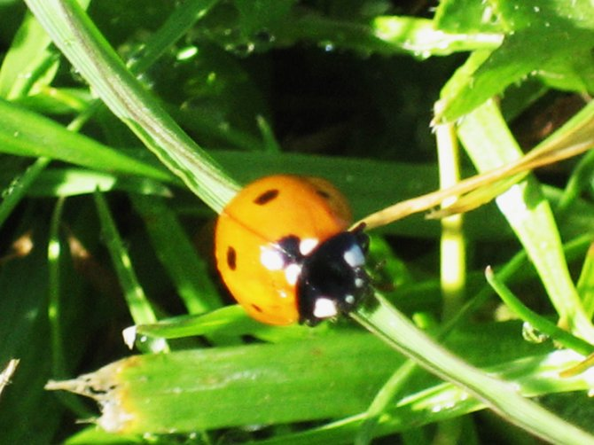 I took this random photo of a ladybug in front of my old house in Chula Vista.