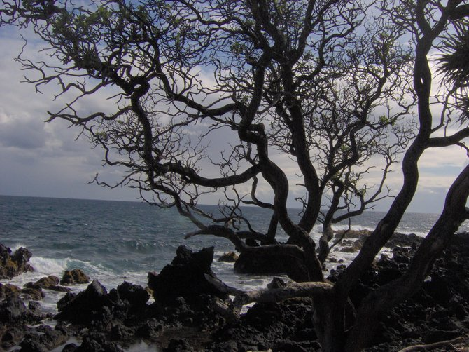 Lovely tree in silhouette on a Maui shoreline.