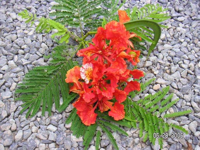 Natural Beauties of the US Virgin Islands