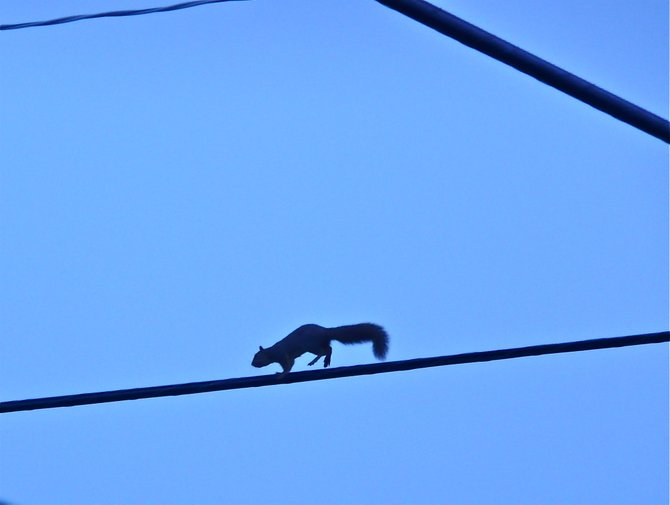 "Wile Squirrel. The most agile ""lineman"" in NP!"