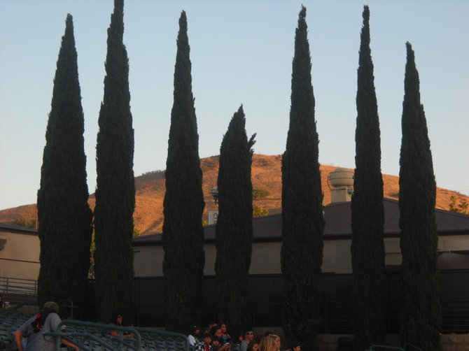 Italian Cypress trees line the Cricket Wireless venue in Chula Vista.