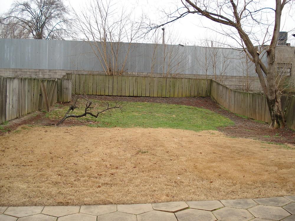 Martin Luther King Jr.'s back yard