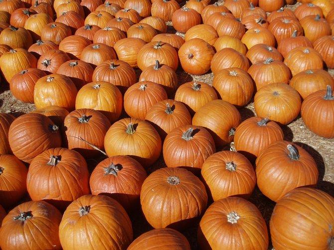 Pumpkins pumpkins everywhere and not a drop to drink.