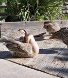 Ducks at the Wild Animal Park.