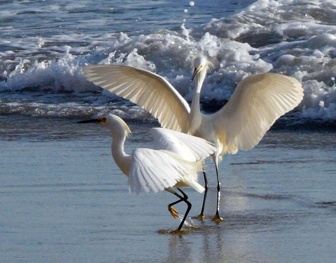 After hiking around Torrey Pines, I took the trail that led