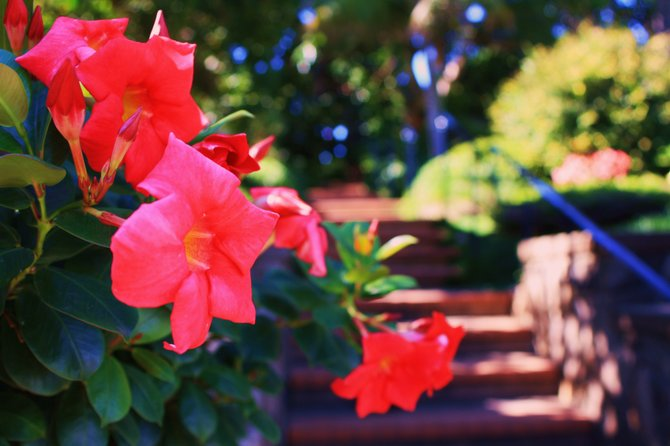 The flowers in the foreground are at the entrance to the stairs of the meditation gardens. I was looking to capture the vivid colors of the flowers in contrast to the shadowy background of the stairs.