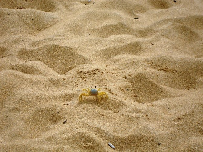 Love watching the crab walk along a beach in Brazil.