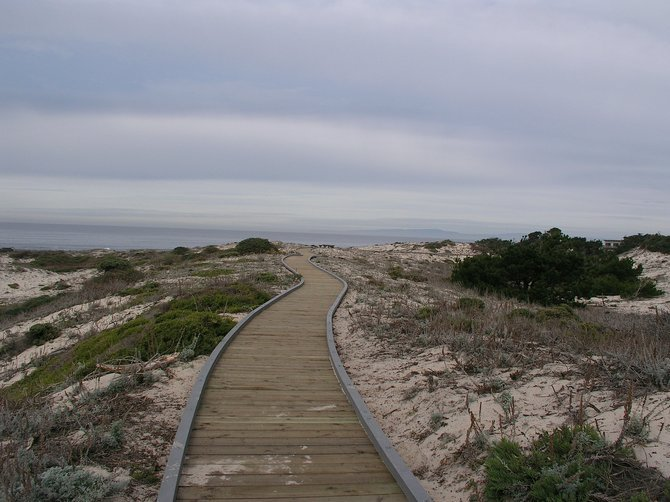 New Trail at Asilomar State Beach in Pacific Grove.  Monterey pine, coyote bush, and coast sagebrush growing in the sand dunes.