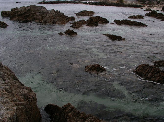 The turquoise blue water at Asilomar State Beach on the Monterey Peninsula is incredibly beautiful.