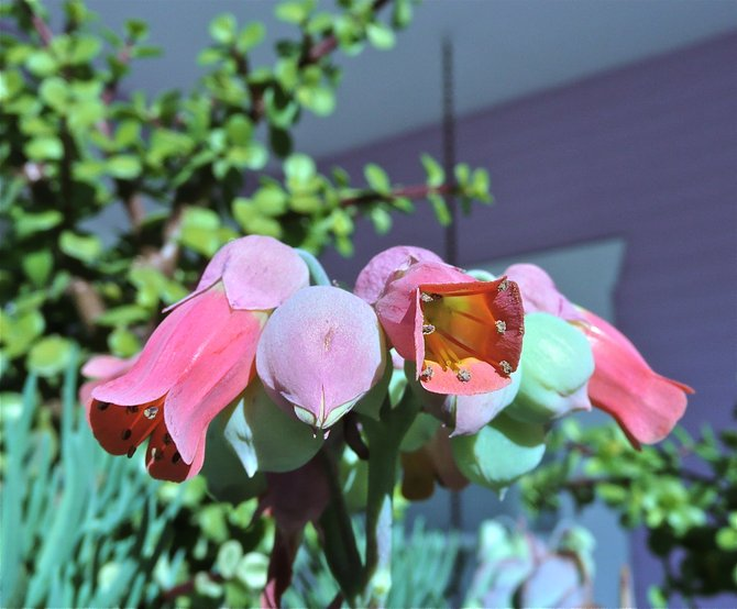 Water wise plants display blooming colors