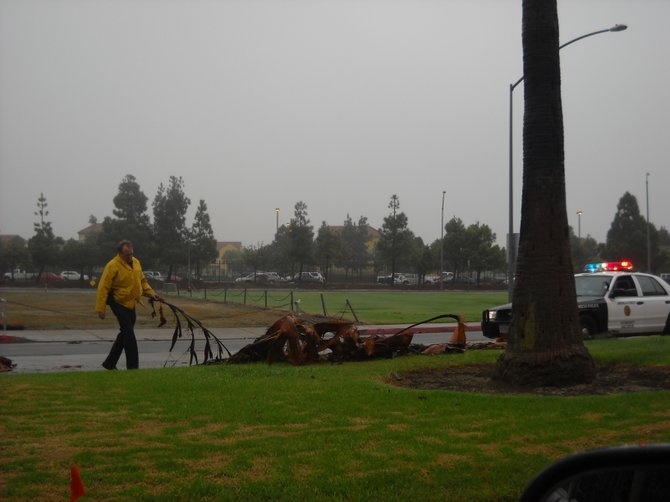 SDPD picking up fallen palm fronds along N. Harbor Drive after rain storm.