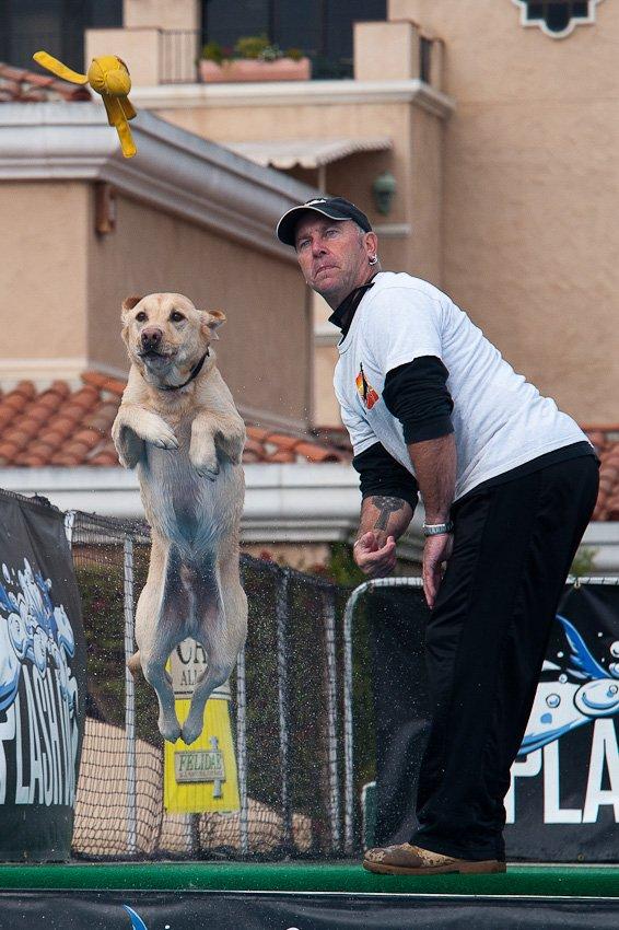 Splash Dog @ Pet Expo
