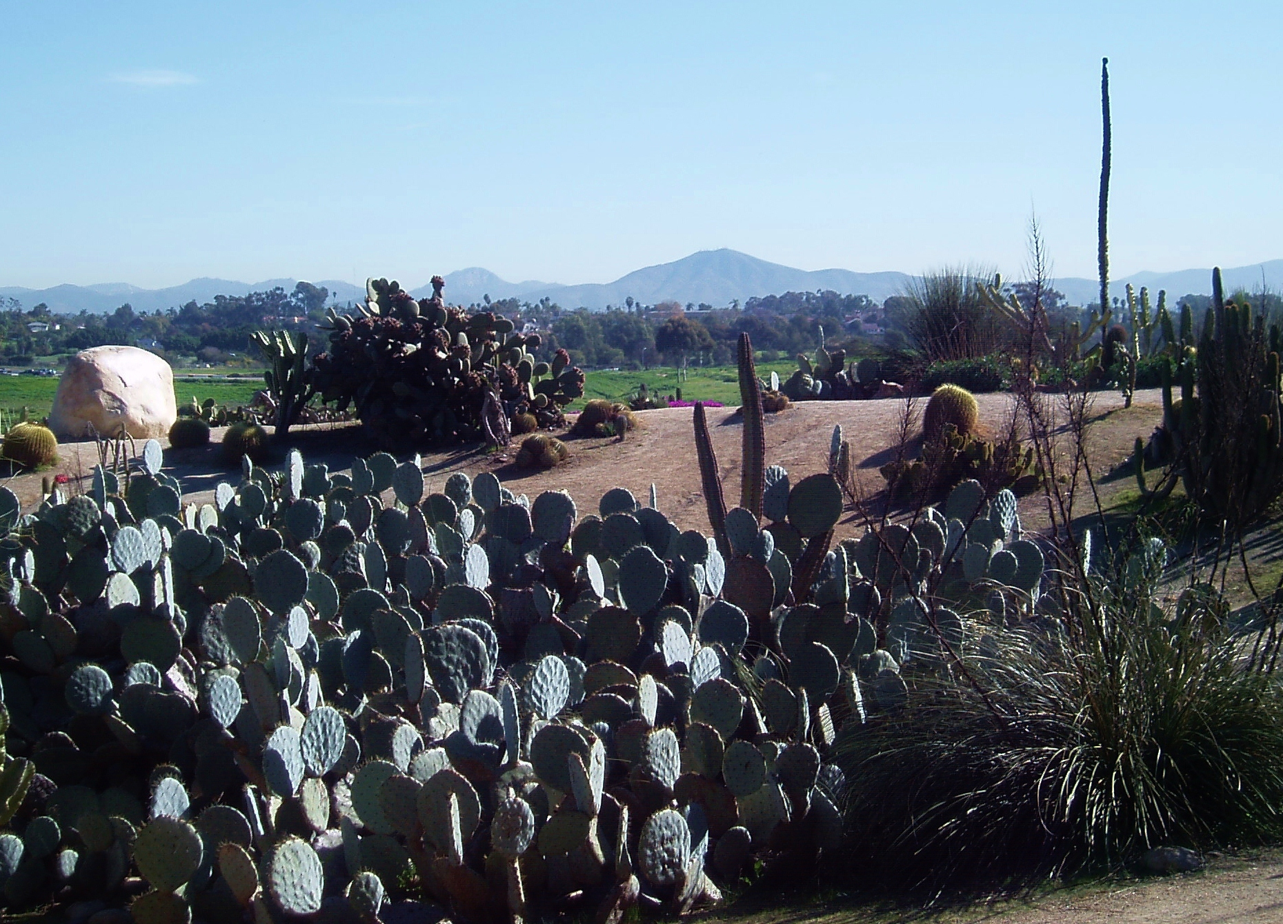 A view of the back country foothills through the cactus garden in Balboa Park.