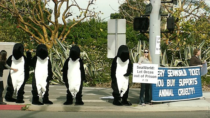 These orca characters got arrested on Feb. 5, 2011.