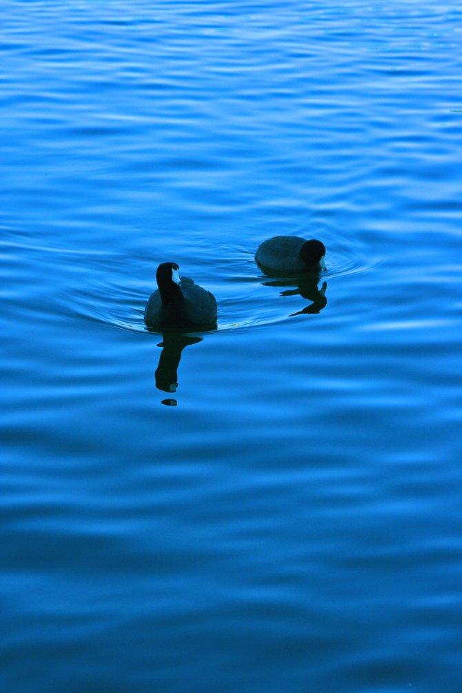 Chula Vista, Eastlake Birds on a January Sunset.