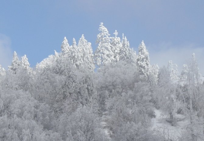 Taken on 2/20/2011 right after a snowstorm on Palomar Mountain.