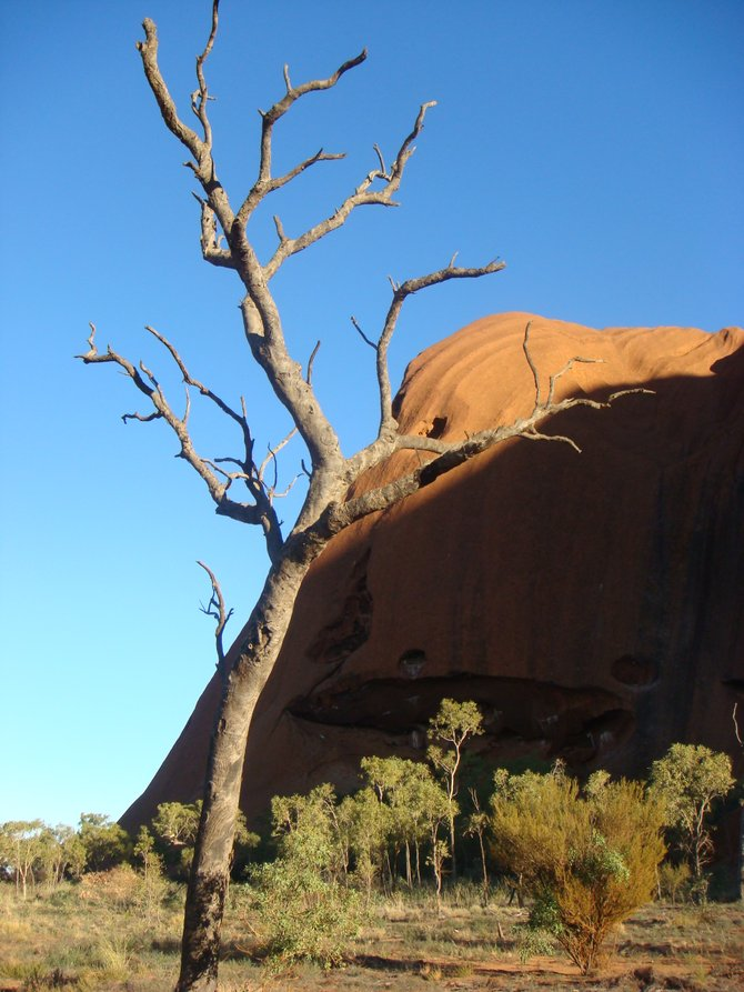 Morning hike around Uluru, captured this desert tree with the beautiful backdrop of Ayer's Rock. Taken by Brad.