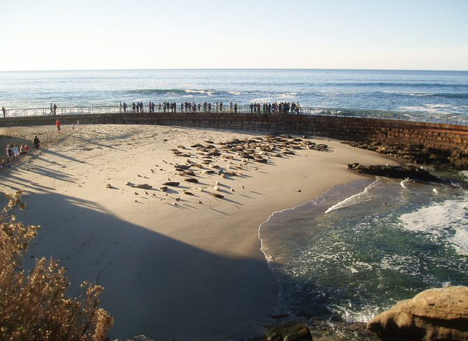 People enjoying the seals from a safe distance at the Children's Pool in La Jolla.