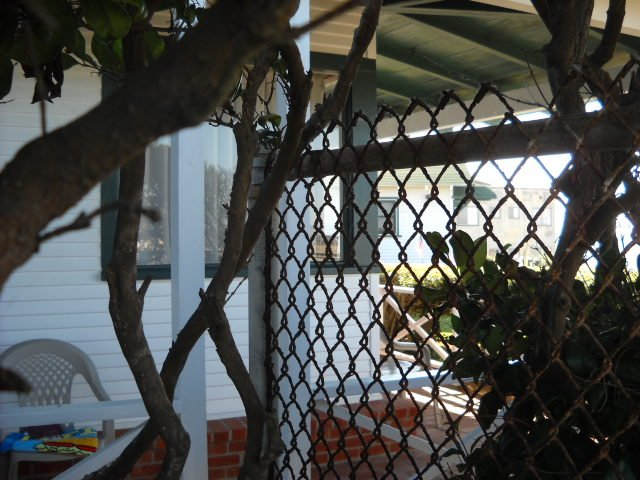 View through fencing & tangled vines of Seaside Cottages at the foot of Niagara in Ocean Beach.