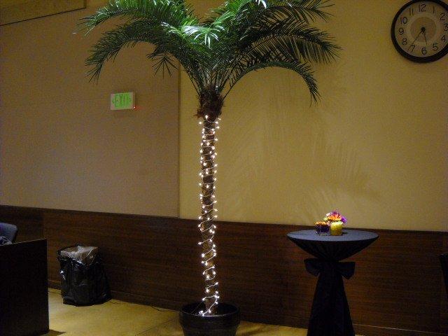 Festive-looking palm tree at The Rock Church's Volunteer Gala.