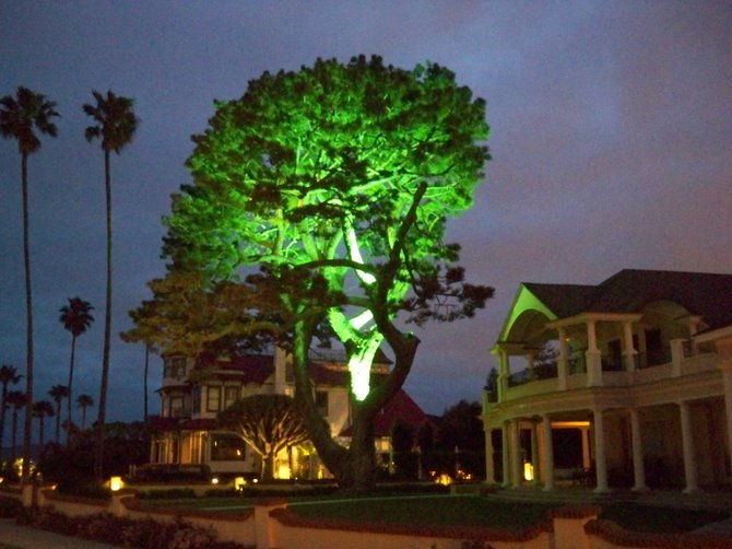 Beautifully lit up tree on Isabella Ave next door to the Mini-Del in Coronado.