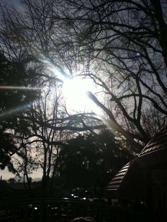 I took this picture at a park. I was about to take a picture of my friend when i looked up and saw like a circle missing tree branches and the sun shining right through the circle. I took a picture of it and it came out beautiful.