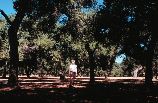Alone among the Oaks of Portero Park