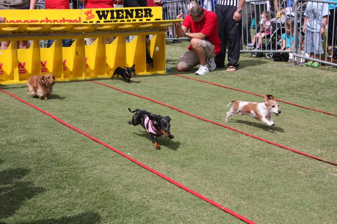 The Wiener Dog Nationals taking place on Aug 28, 2010 next to Qualcomm Stadium.