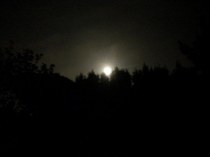 Nights moon over the treetops in my backyard.