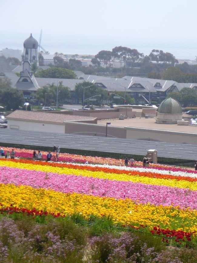 View of the Carlsbad Flower Fields.