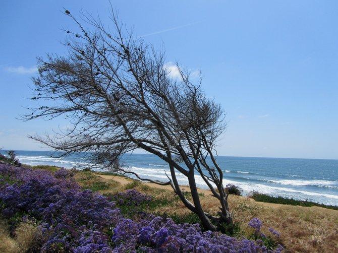 """Pacific Roots"" by: iolanda scripca"