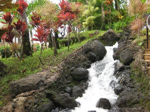 Getting out of the room of the Westin Hotel and Resort, in Maui, you are surrounded by amazing native vegetation and waterfalls...