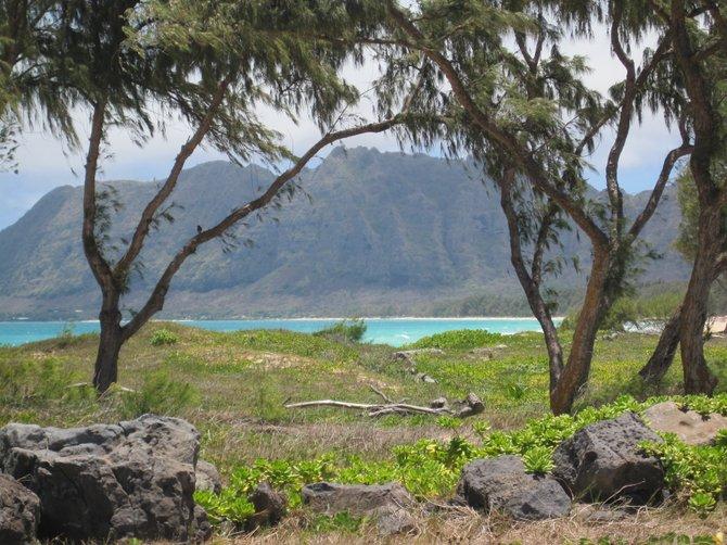 Relaxing on the Hawaiian islands (: