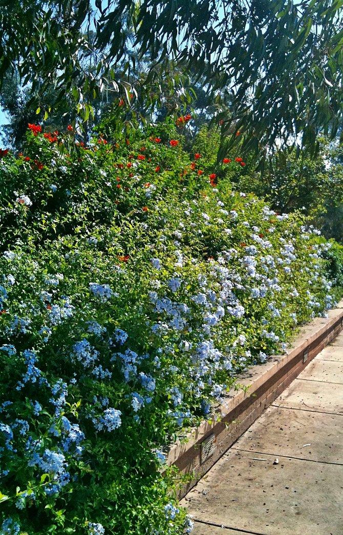 Sidewalk in bloom