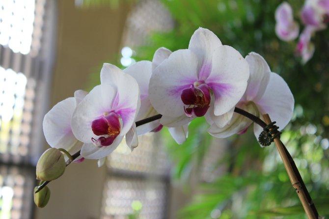 Beautiful flower at the Botanical Gardens in Balboa Park.
