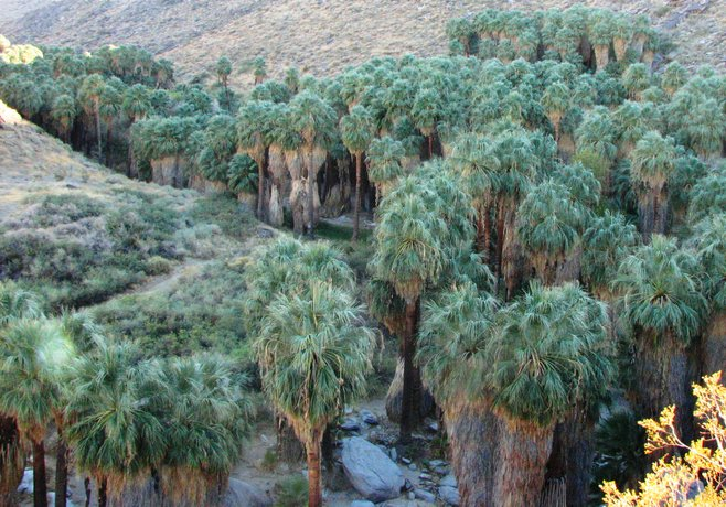 desert hot springs hindu dating site Palm springs / joshua tree koa is located in desert hot springs, california and offers great camping sites click here to find out more information or to book a reservation.
