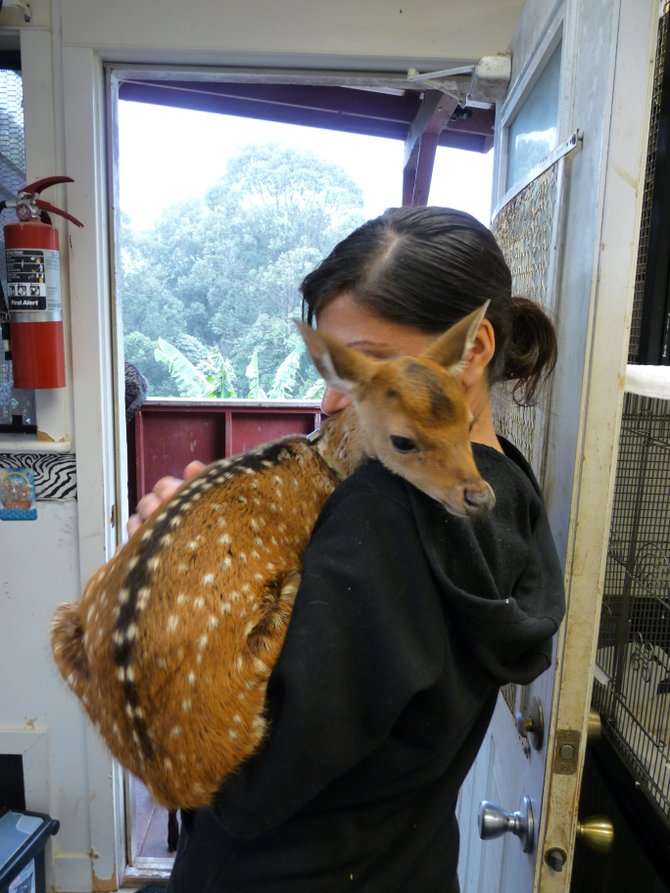 This was a dedicated volunteer at the Boo Boo Zoo; a place my friend and I visited to help volunteer for a day. This volunteer spends just about every day there and diapers this baby fawn so she can take him out with her everywhere.
