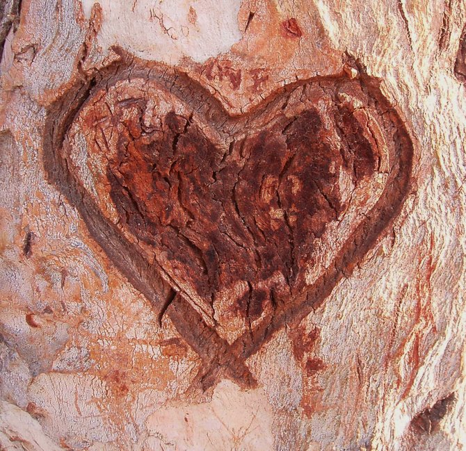 An ode to love carved into the side of a eucalyptus tree in La Mesa