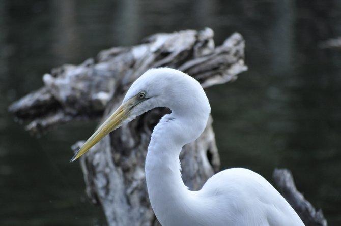This photo was taken at the Wild Animal Park in Escondido, California.