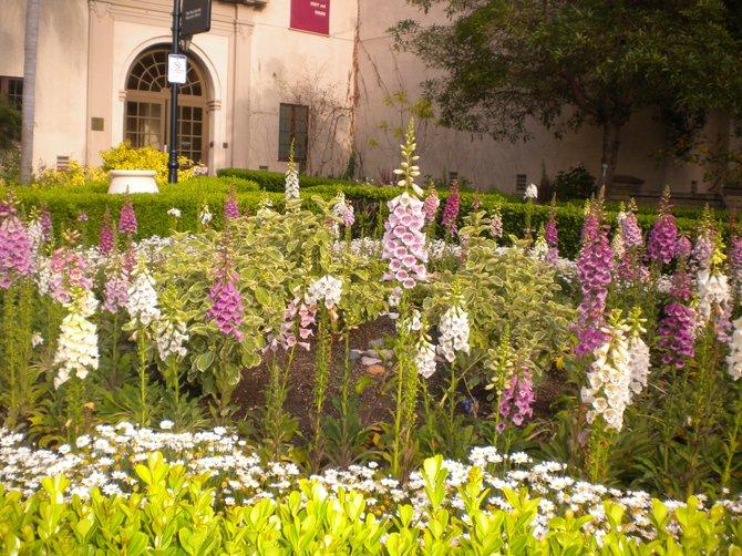 Another view from Alcazar Garden in Balboa Park.
